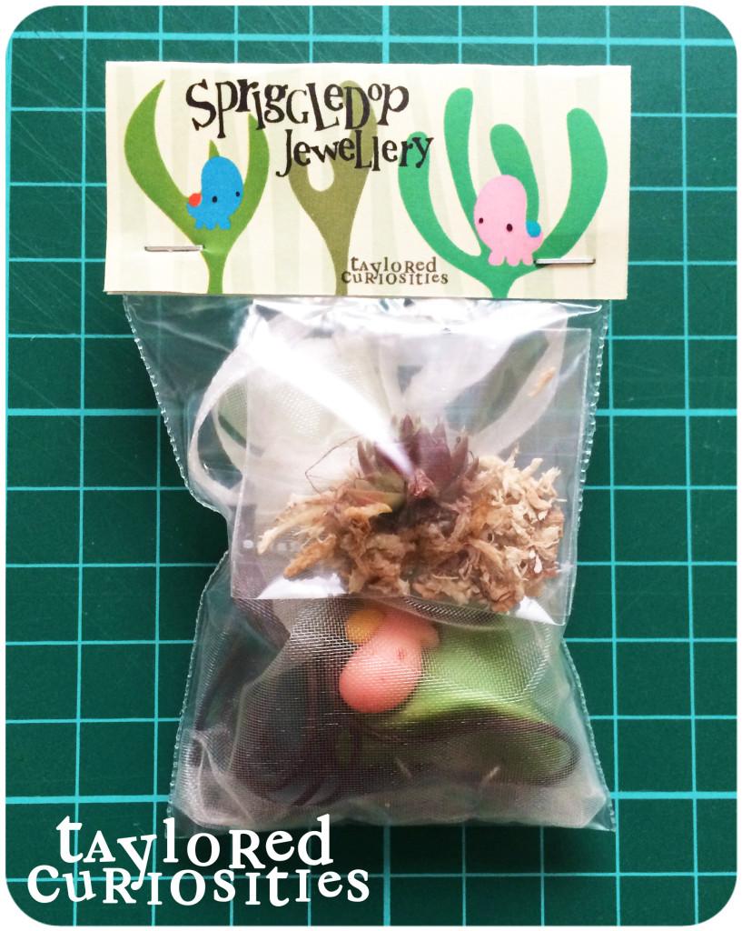 spriggledop packaging planter succulent jewellery snail okemordyn taylored curiosities designer toy